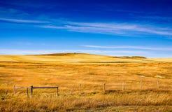 Hösten färgar på lantliga grässlättar, Colorado, Förenta staterna arkivbilder
