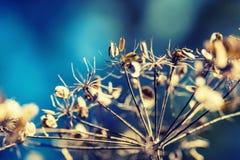 Hösten färgar Torkat - plantera ut körvelskogen i skott för för höstljusfärger och makro Fotografering för Bildbyråer