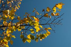 Hösten förgrena sig Royaltyfri Bild