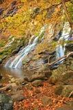 hösten faller ii Royaltyfri Foto