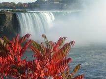 hösten faller niagara Royaltyfri Fotografi
