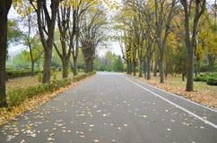 hösten fallna ligganden låter vara parkvägyellow Royaltyfria Bilder