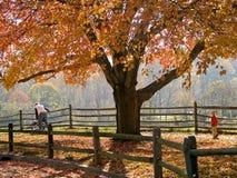 hösten går royaltyfri fotografi