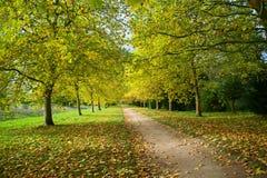 Hösten går i träna Royaltyfri Bild