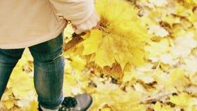 Hösten går med buketten av gula sidor stock video
