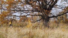 Hösten går på bakgrund av den ensamma gamla eken arkivfilmer