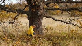 Hösten går på bakgrund av den ensamma gamla eken stock video