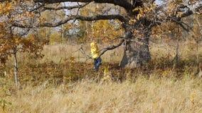 Hösten går på bakgrund av den ensamma gamla eken lager videofilmer