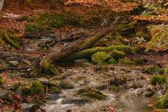 hösten gjorde tidigt bergbergbilden den polara strömmen Royaltyfria Bilder