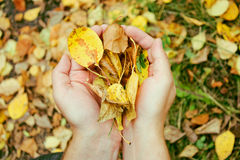 hösten hands leaves Arkivbild