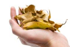 hösten hands mitt Royaltyfri Foto