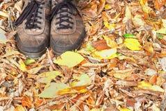 Hösten har kommit Royaltyfri Foto