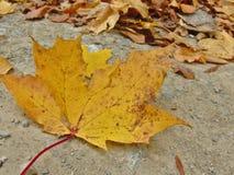 Hösten har kommit i våra trän arkivfoto