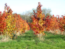 Hösten har målat landskapet Royaltyfri Bild
