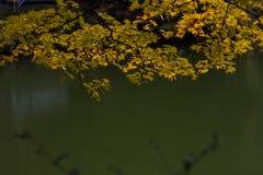 Hösten i den Jojakko-ji templet, Kyoto, Japan Royaltyfri Foto