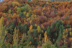 Hösten i den Ordesa dalOrdesa nationalparken - Monte Perdido fotografering för bildbyråer