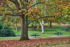 Hösten i dunge parkerar, Harborne, Birmingham, UK royaltyfri fotografi