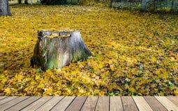 Hösten i gammalt parkerar i Dubulti, Jurmala, Lettland Fotografering för Bildbyråer