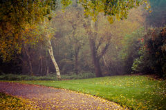 Hösten i Goldsworth parkerar, i att woka Fotografering för Bildbyråer