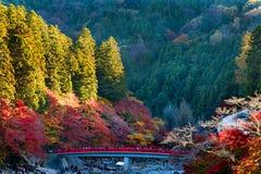 Hösten i Japan Korankei parkerar arkivfoto