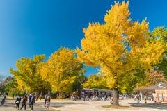 Hösten i minnes- Showa parkerar, Tachikawa, Japan Arkivbild