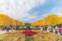 Hösten i minnes- Showa parkerar, Tachikawa, Japan Arkivfoto