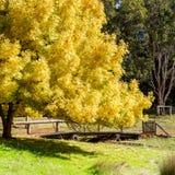 Hösten i parkerar med den stora trädbron och porten royaltyfria foton