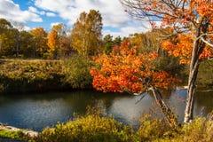 Hösten i provinsiella Killarney parkerar Ontario Kanada Arkivbild