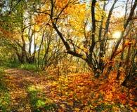 Hösten i skogbanan parkerar in arkivfoton