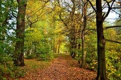 Hösten i staden parkerar Royaltyfri Fotografi
