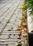 Hösten i staden parkerar arkivfoton