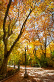 Hösten i stora Campo parkerar Fotografering för Bildbyråer