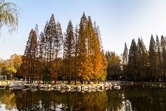 Hösten i Zhongshan parkerar, Qingdao, Kina Arkivbilder