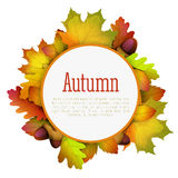 hösten innehåller banan för mappramleaves Royaltyfri Foto