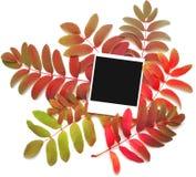 hösten inramniner leaves över Royaltyfri Fotografi