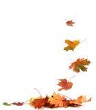 hösten isolerade leaves Arkivfoton