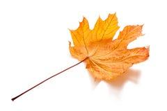 hösten isolerade leaves arkivfoto