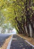 Hösten kom i staden arkivbild