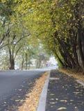Hösten kom i staden royaltyfri bild