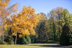 Hösten kom till Oregon Nedgångfärger i ett Dawson Creek parkerar arkivbild