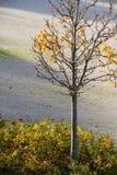 hösten kommer har Tree i parkera Royaltyfri Fotografi
