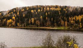 Hösten kommer Skogbältet tidig sommar för lakemorgonkust Gula Trees royaltyfri fotografi