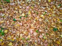Hösten lämnar fotografering för bildbyråer