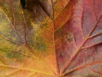 Hösten lämnar Royaltyfri Foto