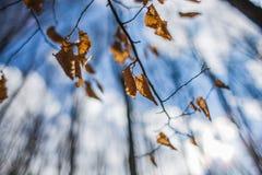 Hösten lämnar Arkivbilder