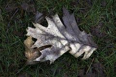 Hösten lämnar Royaltyfria Bilder