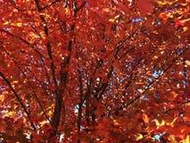 Hösten lämnar Arkivfoto