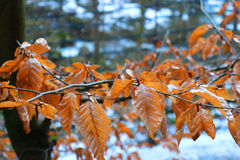 Hösten lämnar Royaltyfri Bild