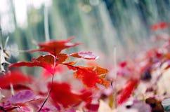 Hösten lämnar bakgrund Royaltyfria Bilder