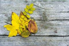 Hösten lämnar bakgrund royaltyfria foton